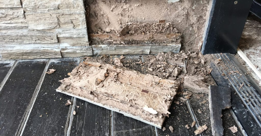 7 Early Warning Signs Of Termites