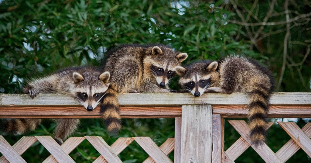 Danger Wildlife Animals That Can Be Luring In Your Nj Property