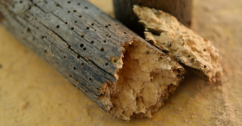 Difference Between Termites And Woodworms