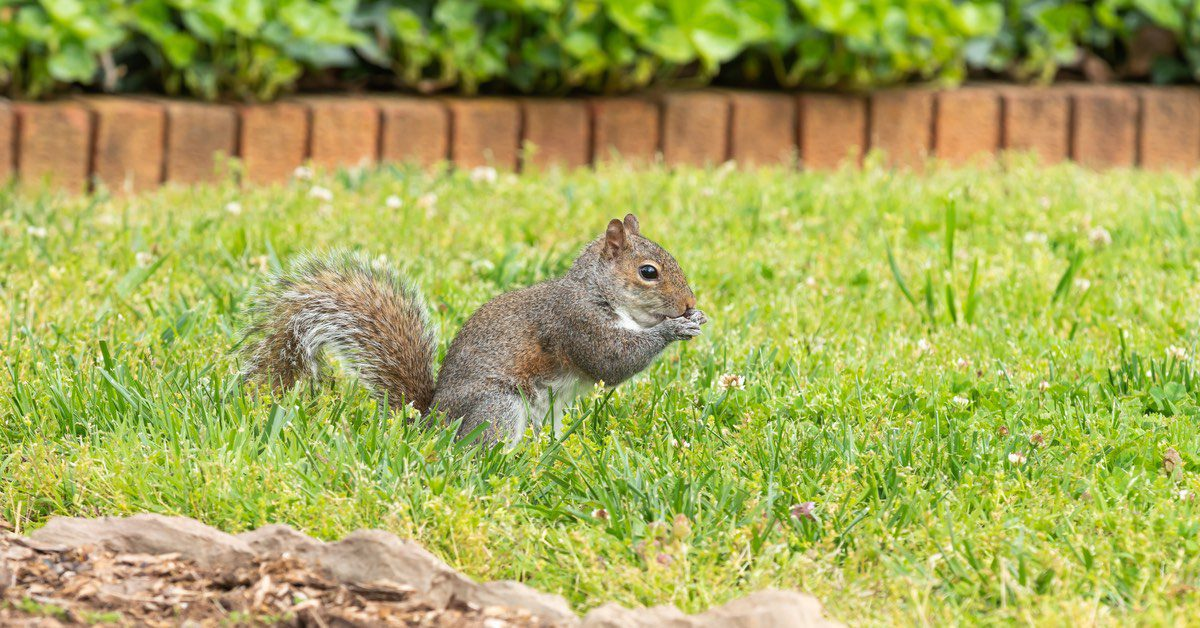 how to keep squirrels out of my yard
